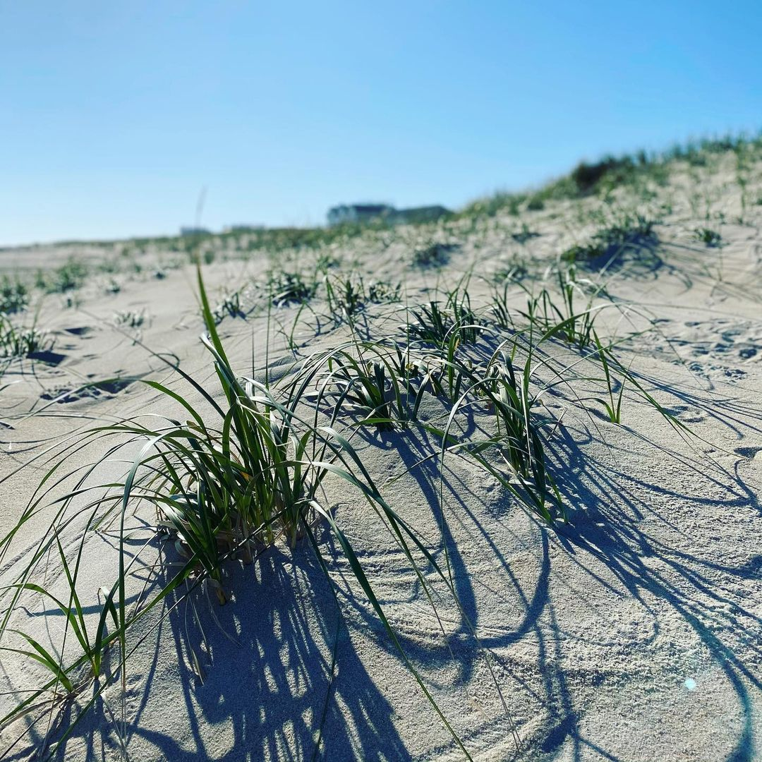 LBI It's a summer day….in November!!…