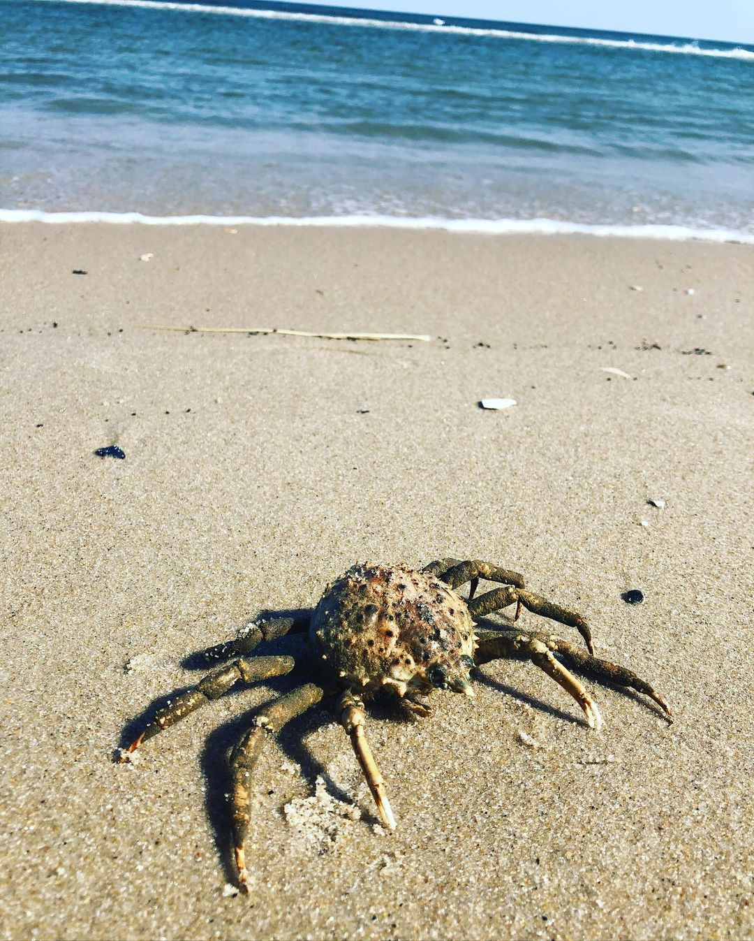 LBI Quarantine have you feeling crabby? Summer is almost here!                 …