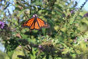 March 13 Science Saturday Spotlights 'Eight Steps to an LBI-Friendly Yard'