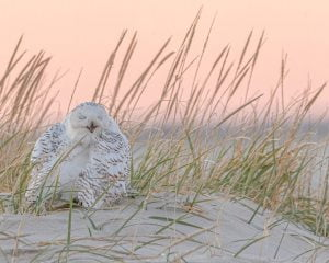 Read more about the article Seaside Sightseeing: How to Observe LBI's Marvelous Creatures