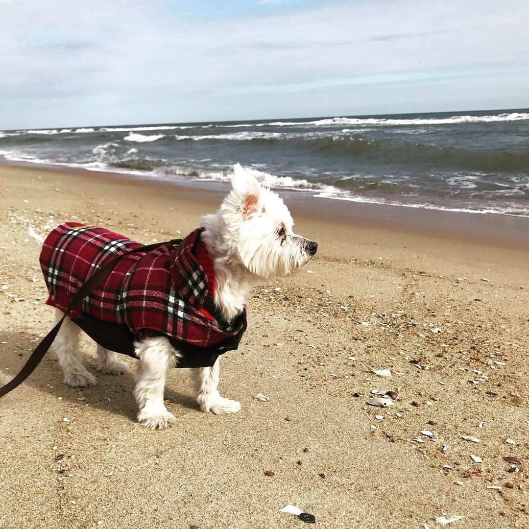 Read more about the article LBI Just a lovely November morning on the beach. Despite the 37 degree temperatures,…