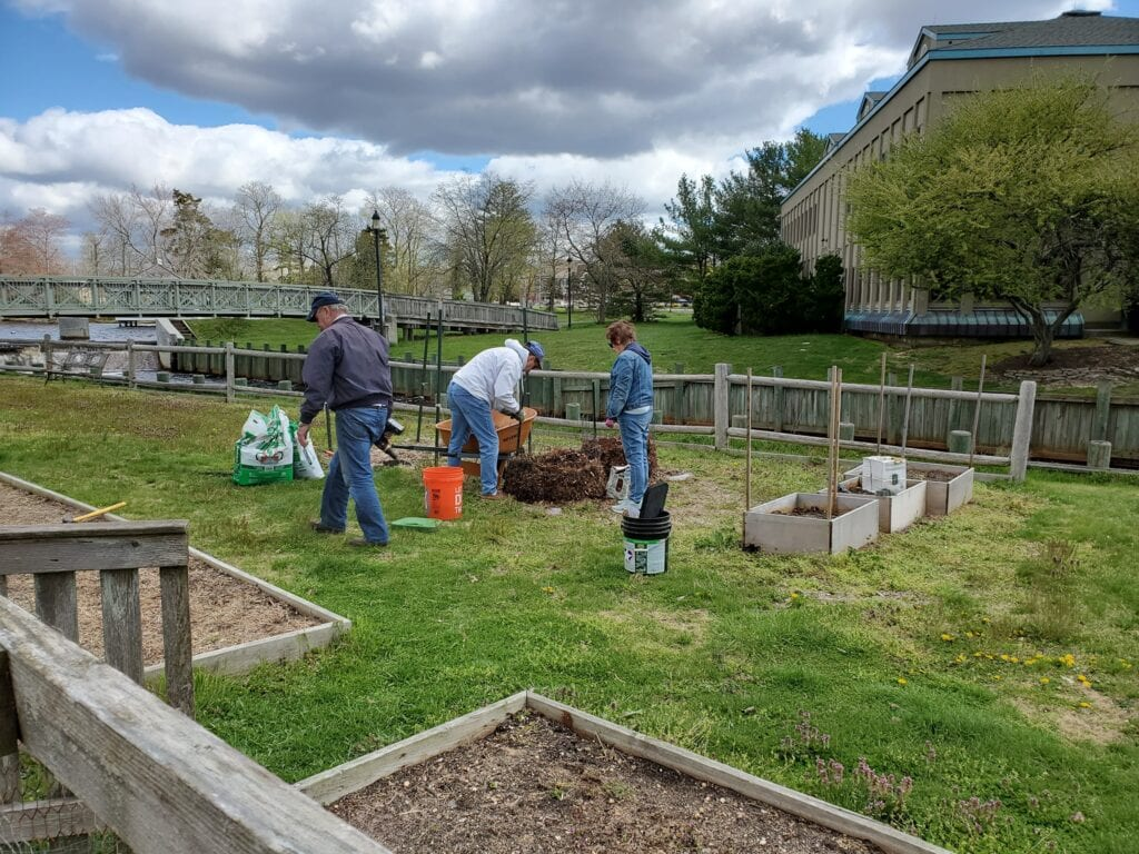 Stafford's Community Gardens Spring to Life
