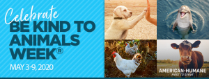 Read more about the article Celebrate 'Be Kind to Animals' Week