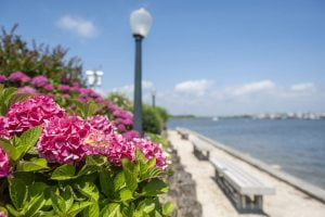 Read more about the article New Ship Bottom Taxpayers Group Tackles Safety, Beautification in Borough