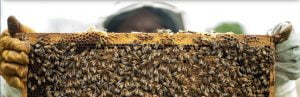 Read more about the article LBI Foundation Hosts Honey Harvest Festival Sept. 10