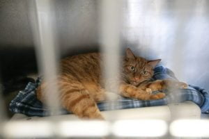 Read more about the article Southern Ocean County Animal Facility Hopes to 'Clear the Shelter'